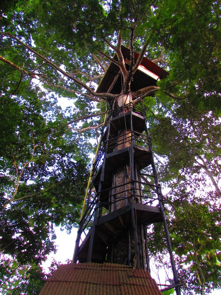 Casa en el árbol Paway