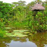 Expreso Amazonía
