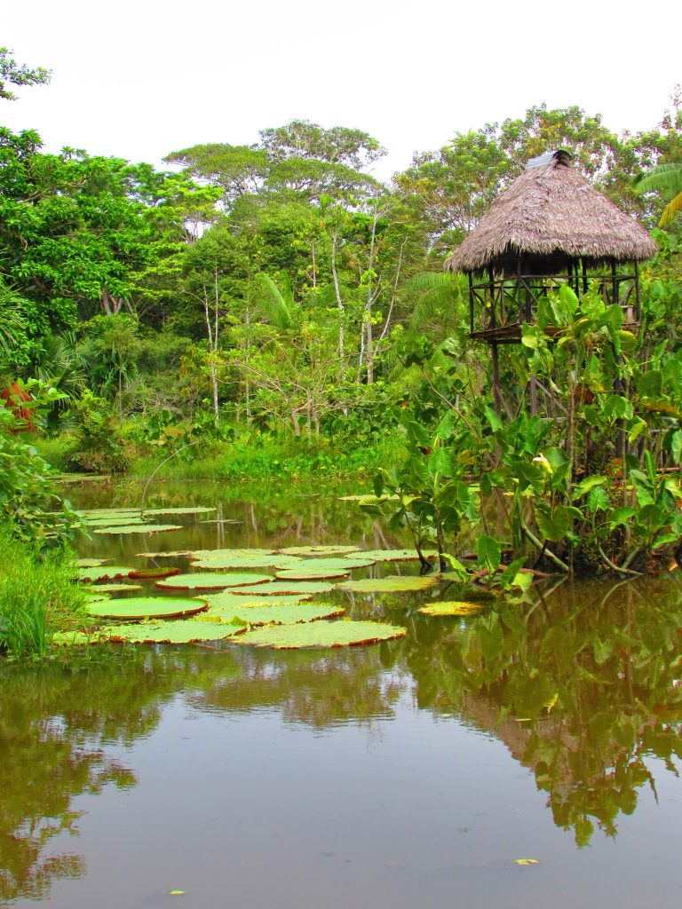 Expreso Amazonia