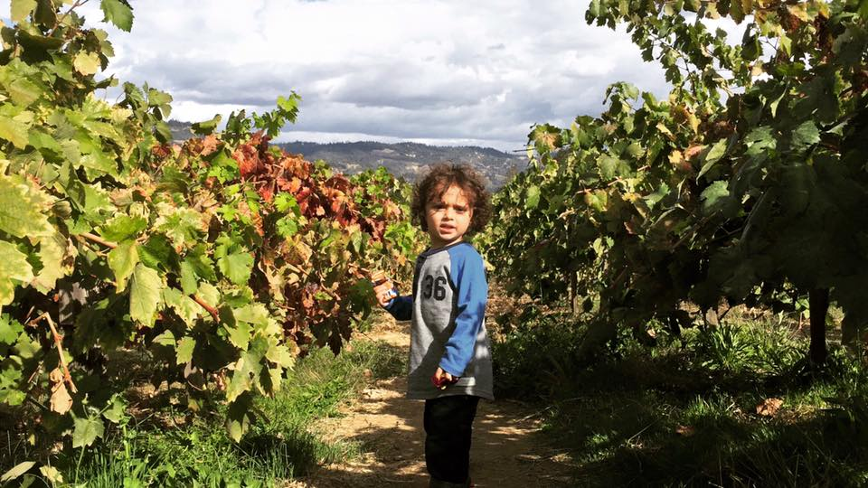 Sammy recorriendo los villedos de Napa Valley